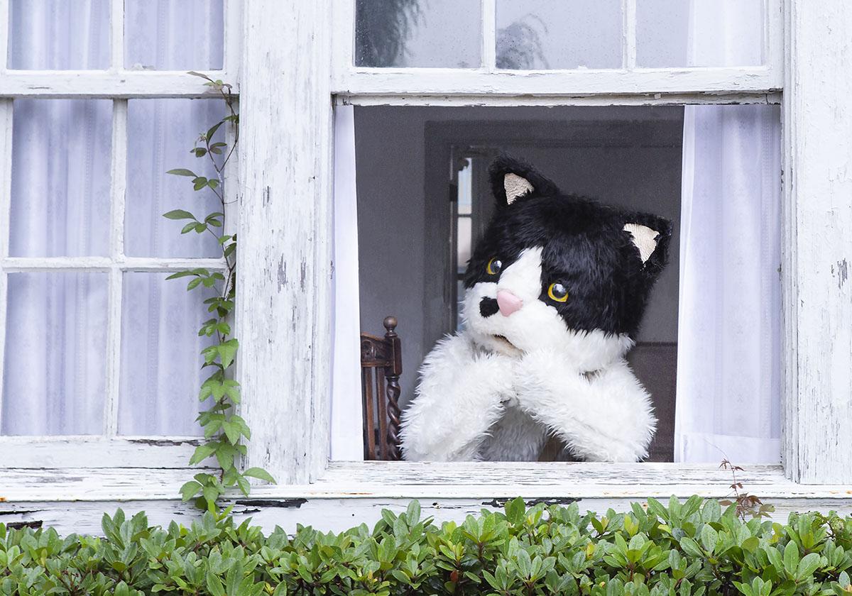 むぎ(猫)、ミュージックビデオ「窓辺の猫 feat. つじあやの (みんなの窓辺の猫 ver.)」を公開