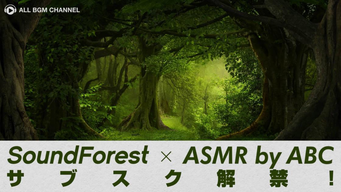 音の森にようこそ!「Sound Forest」の環境音がサブスク解禁サムネイル画像