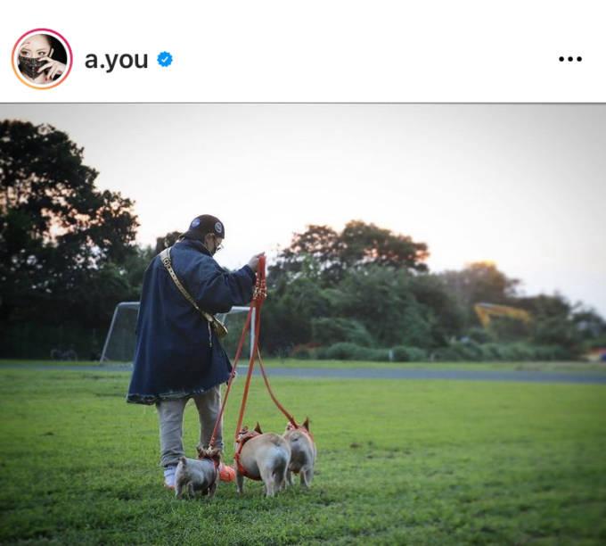 「リハやって家族時間作って…」浜崎あゆみ、犬3匹と過ごす散歩SHOTに反響「癒される」「ほっこり」