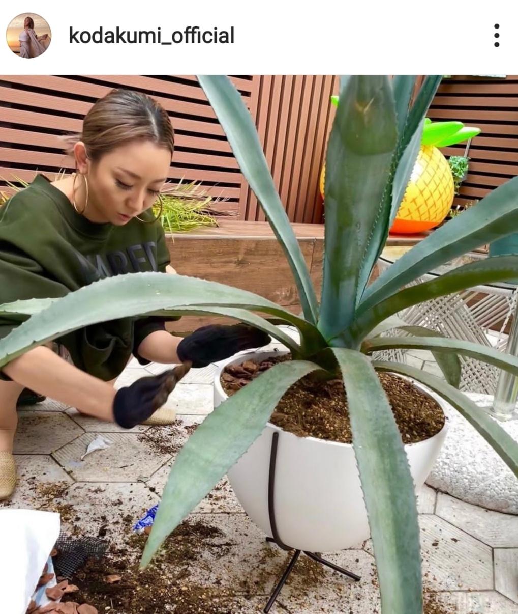 「お庭オシャレすぎる」倖田來未、趣味のガーデニングSHOTに反響「何しても絵になるなぁ」